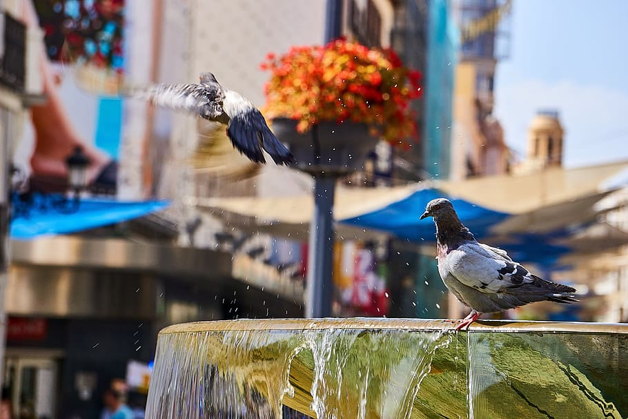 spain madrid fountain pigeons